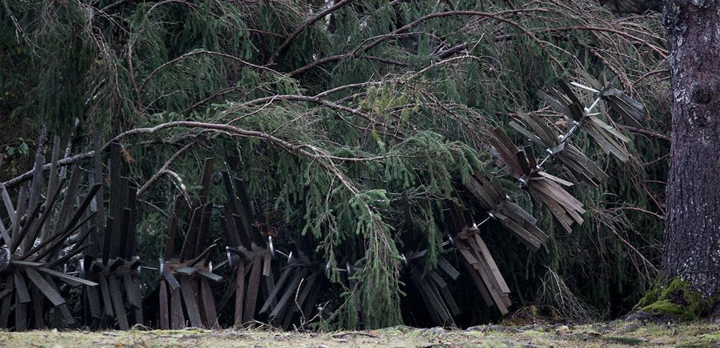 levico acqua minerale artesella distruzione foresta